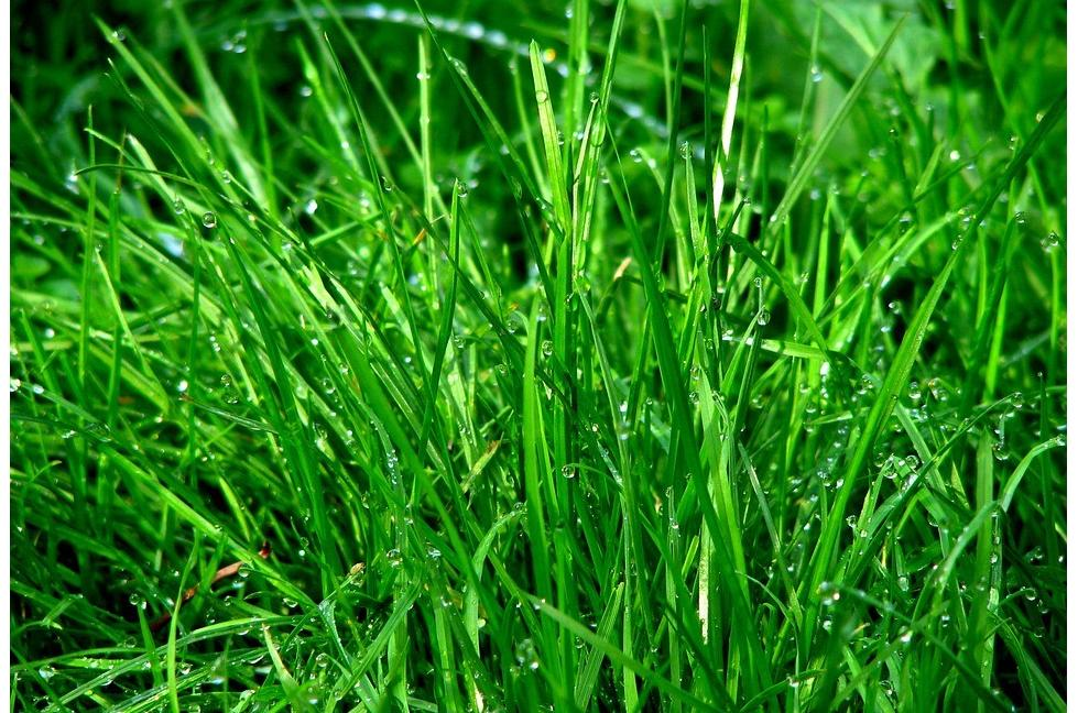 quand tondre la pelouse pour la derni re fois derni re tonte. Black Bedroom Furniture Sets. Home Design Ideas